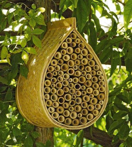 ساخت کندو عسل توسط زنبورها