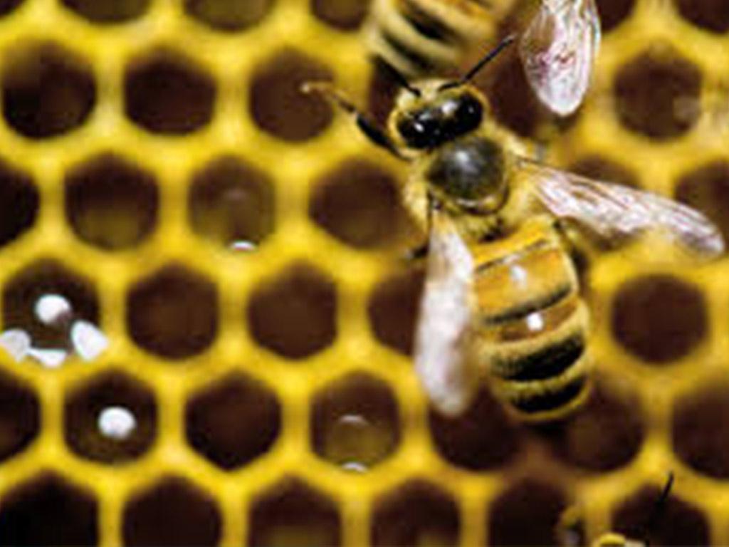 عسل ضد سرطان از همه نوع هست